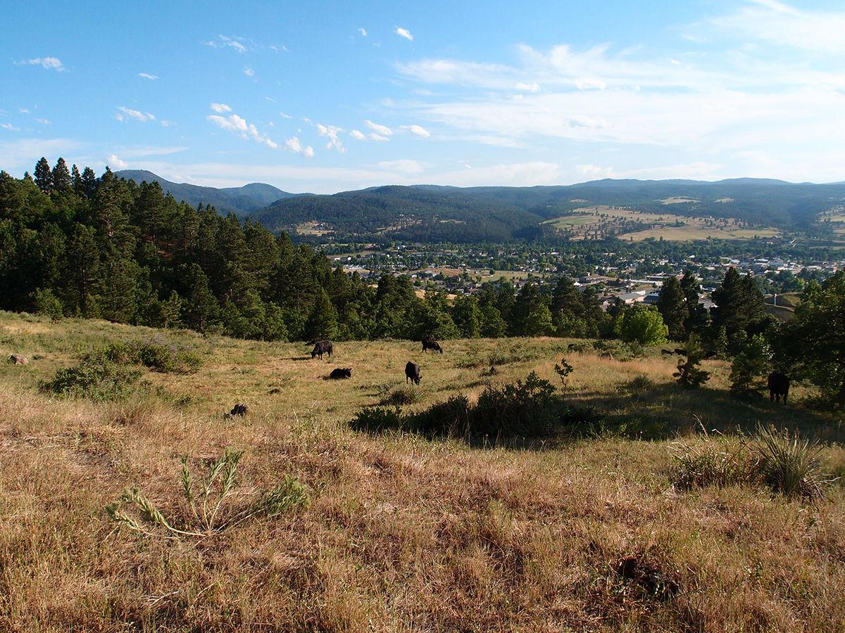 Grazing a management tool on Lookout Mountain