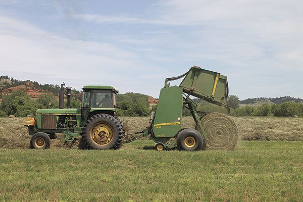 Black Hills beef: When the cows are away, it's time to 'hay'