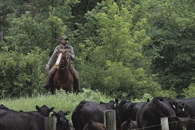 Spearfish Livestock Association weighs in on multiple uses on public land