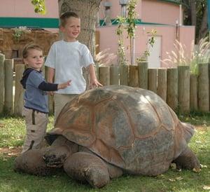 Reptile Gardens' Methuselah dies at 130 years old