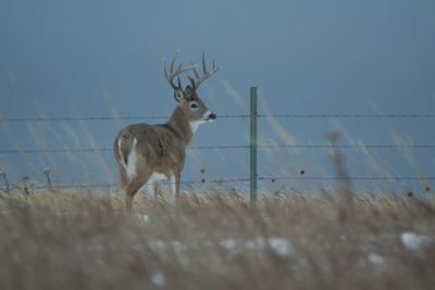 CWD confirmed in additional SD counties