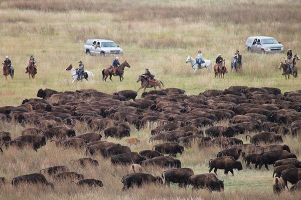 Go Go, Buffalo!