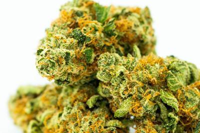 Cannabis or can't-abis: