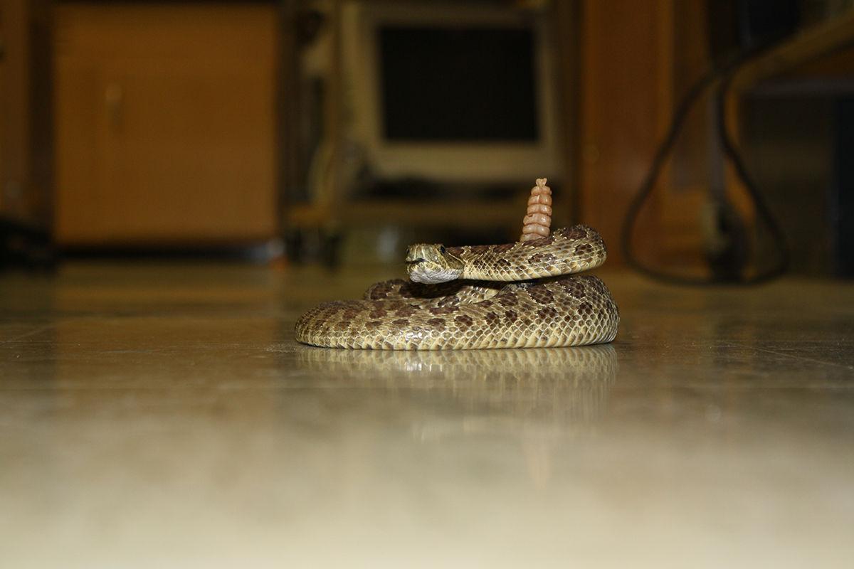 Lead man bitten by rattlesnake at Sand Creek   Local News ...