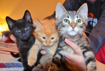 'Kitten season' fills shelters, rescuers' homes
