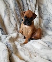 Items for Sale   Pets   billingsgazette com