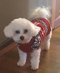 Items For Sale Pets Billingsgazettecom