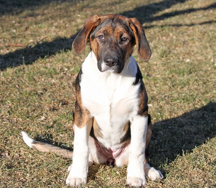 Large, mixed-breed puppy image 1