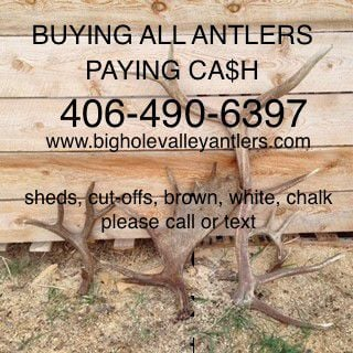 BUYING ANTLERS, PAYING CASH all grades image 1