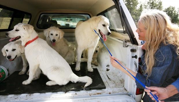 Billings Mt Rescue Dogs