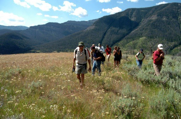 Grizzly bear ecologist Chuck Neal leads a hike into