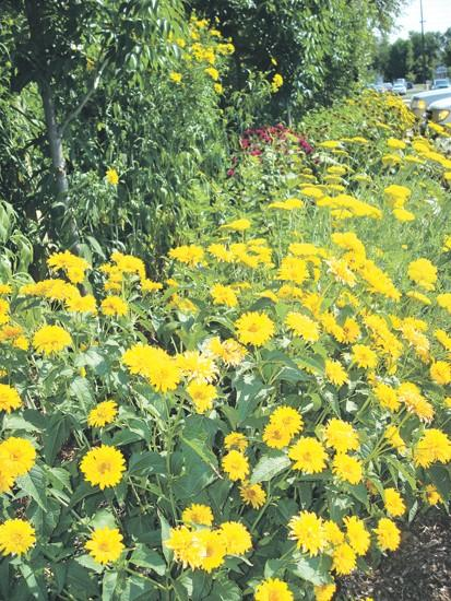 Blooming With Ideas Water Wise Garden Uses Native Plants