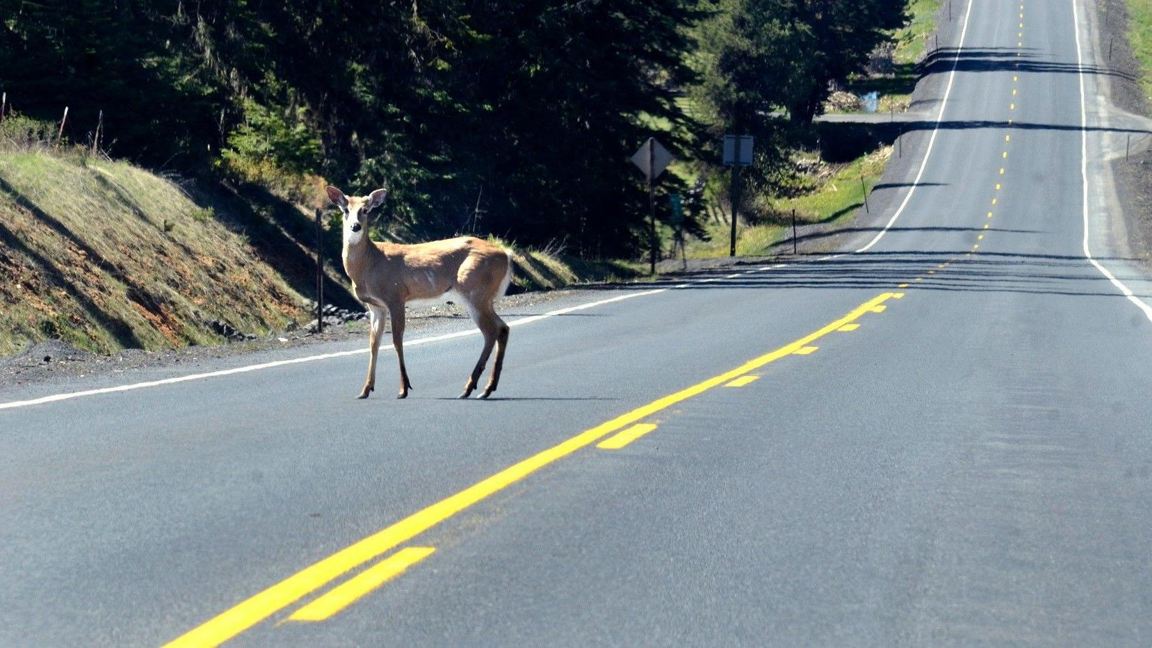 Lower speed limit may have reduced Wyoming wildlife crashes