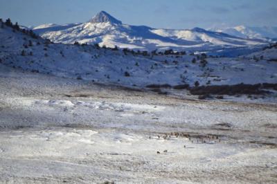 Elk winter range