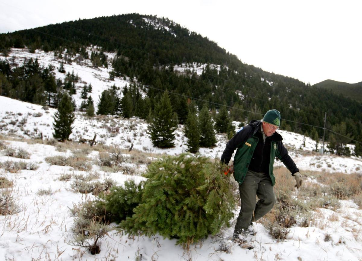 Hunting Christmas Tree