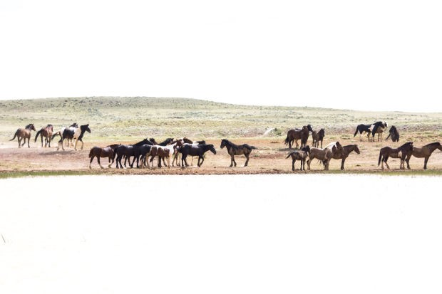 WYO060914-horses.jpg
