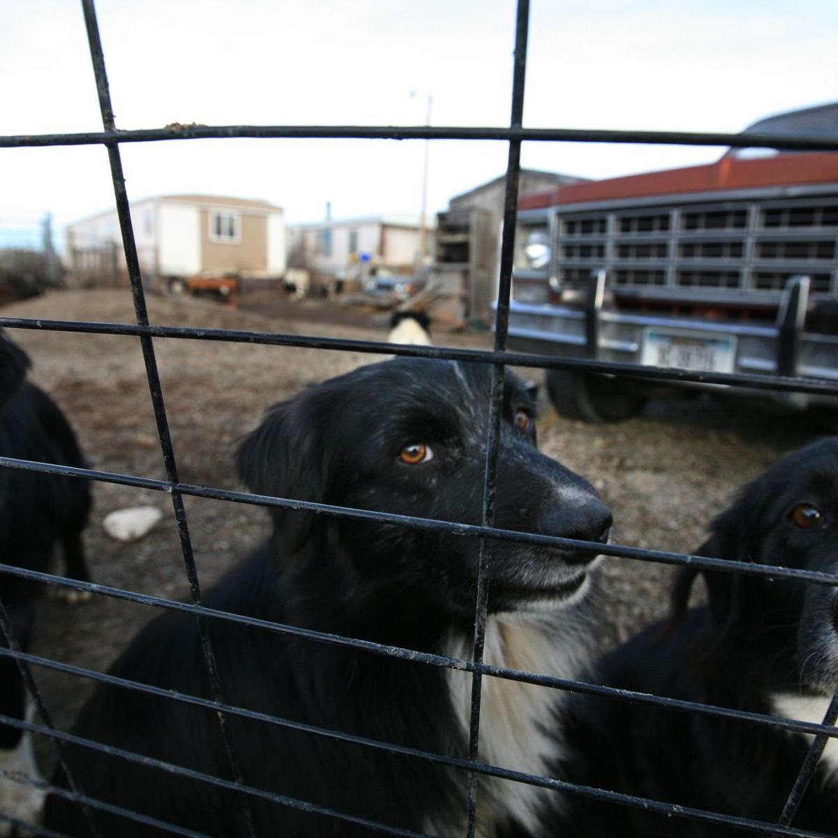 Gazette opinion: Puppy mill misery in Montana | Editorial