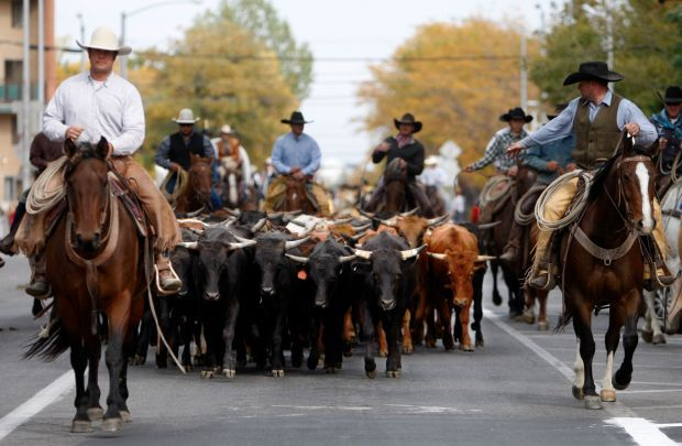 Harvestfest Cattle Drive Combine For A Good Time Downtown