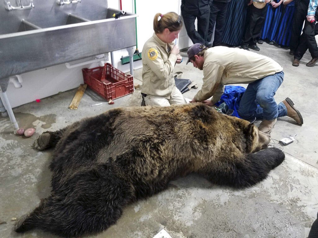 Hunting Grizzlies-Congress