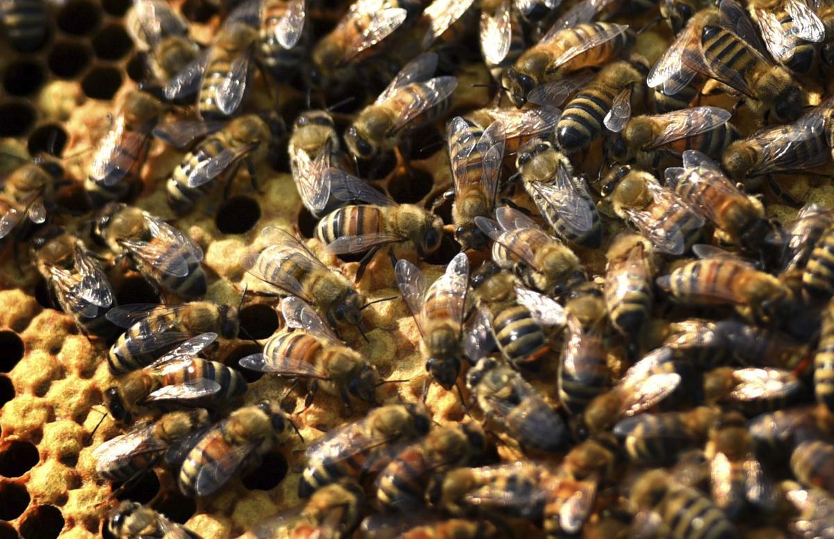 Exchange Flathead Beekeepers Guild