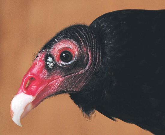 expert sees beauty even in vultures