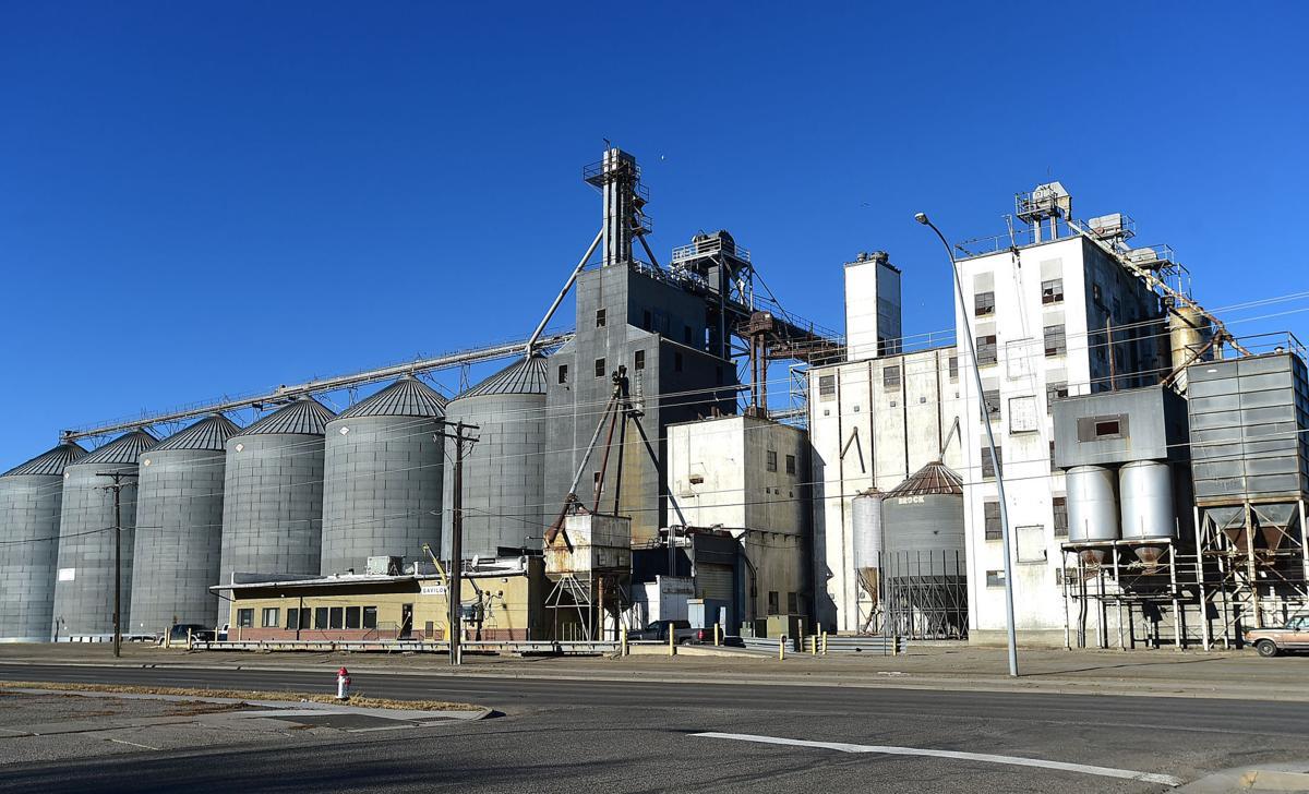 Grain 2021