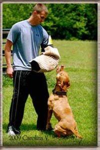 Nick-dog-trainer-200x300.jpg
