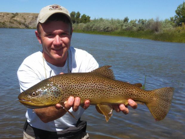 Fishing report bighorn river montana s huge spring creek for Bighorn river fishing report