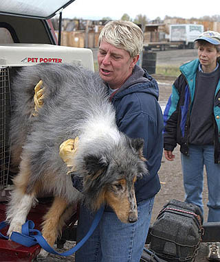 Captive dogs move to Great Falls