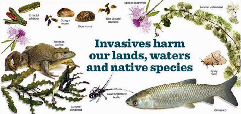 Invasive species website goes live   Outdoors   billingsgazette.com
