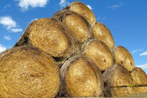 Montana expands hay lottery as drought, fire situation worsen
