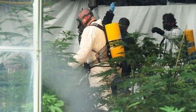 Montana Cannabis raid
