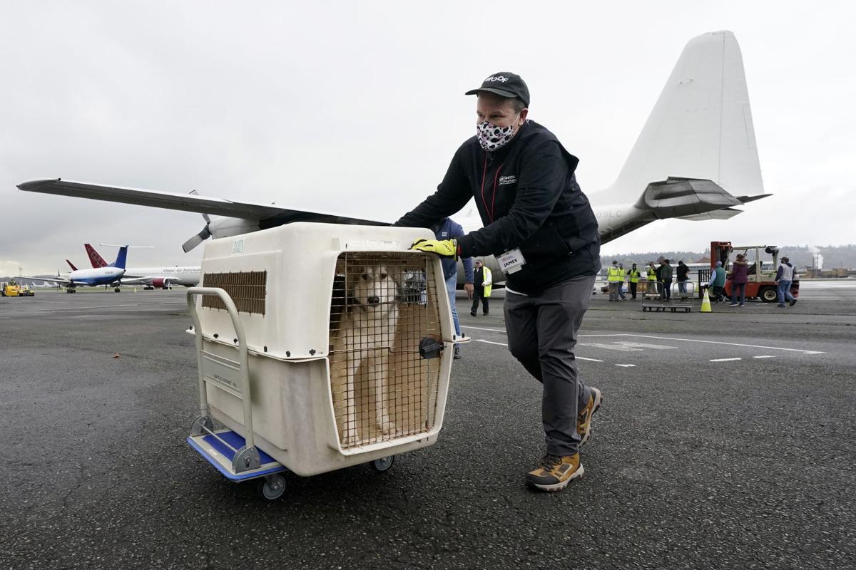 Virus Outbreak Pet Flight