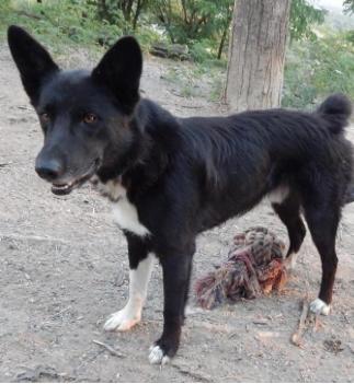 Bjorn — Rez Dog Rescue | | billingsgazette com
