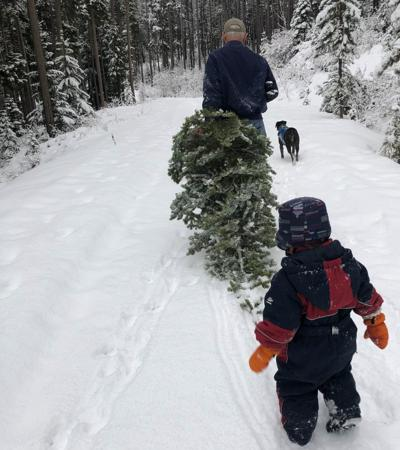 Tree hunting