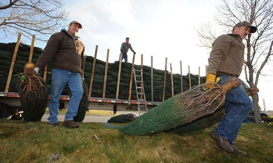 Optimist Clubs prepare for tree sales