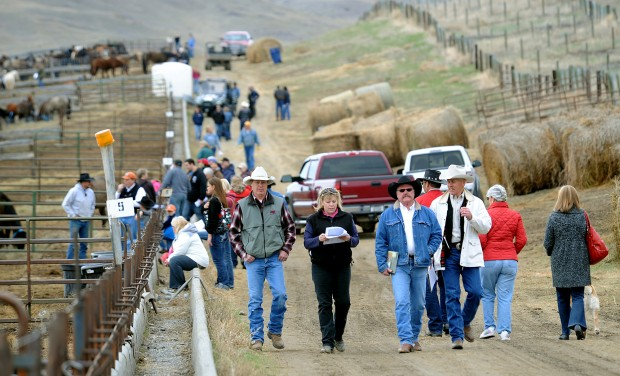 Horse buyers gather