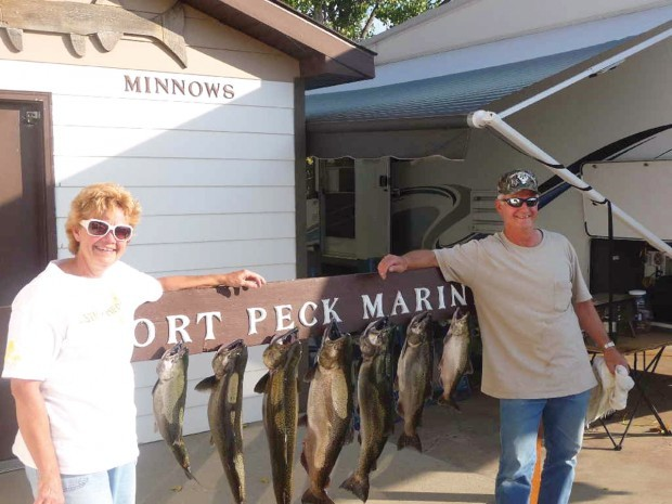 Fort Peck salmon