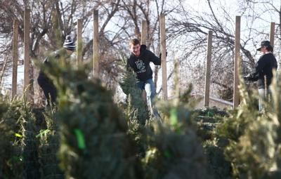 Knights of Columbus unload Christmas Trees
