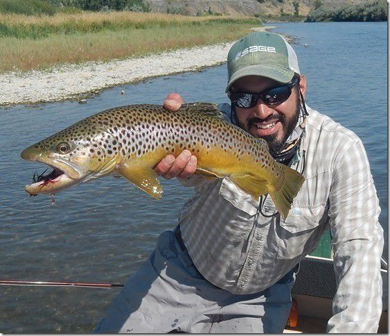 2f19c4d8bc86 Big brown. Dante Bonanini reeled in this fat brown trout while streamer  fishing with Bob Krumm on the Bighorn River ...