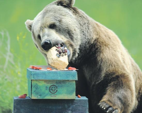Instincts Kick In At Bears Birthday Bash Local - Bear birthday cake