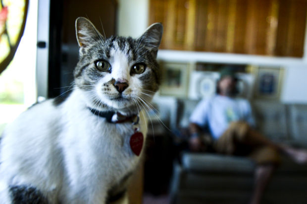 Man finds cat, owners live in Oregon