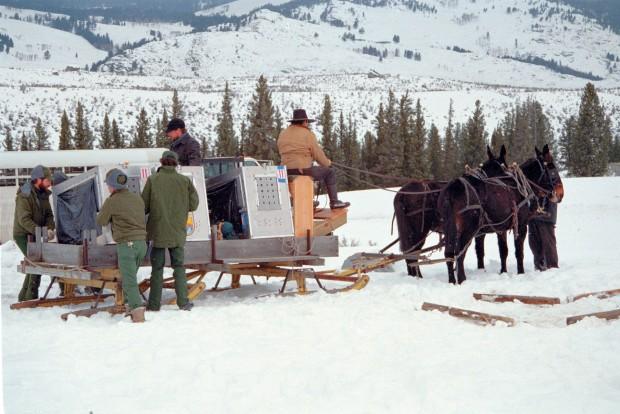 Wolf sleigh ride 1995