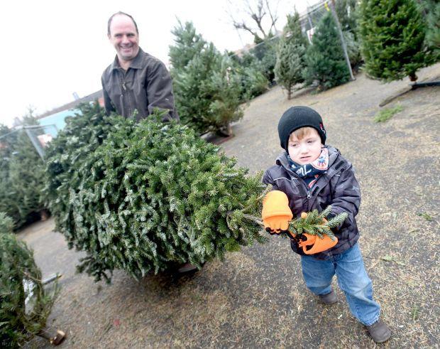 Christmas trees selling well in Billings   Local   billingsgazette.com