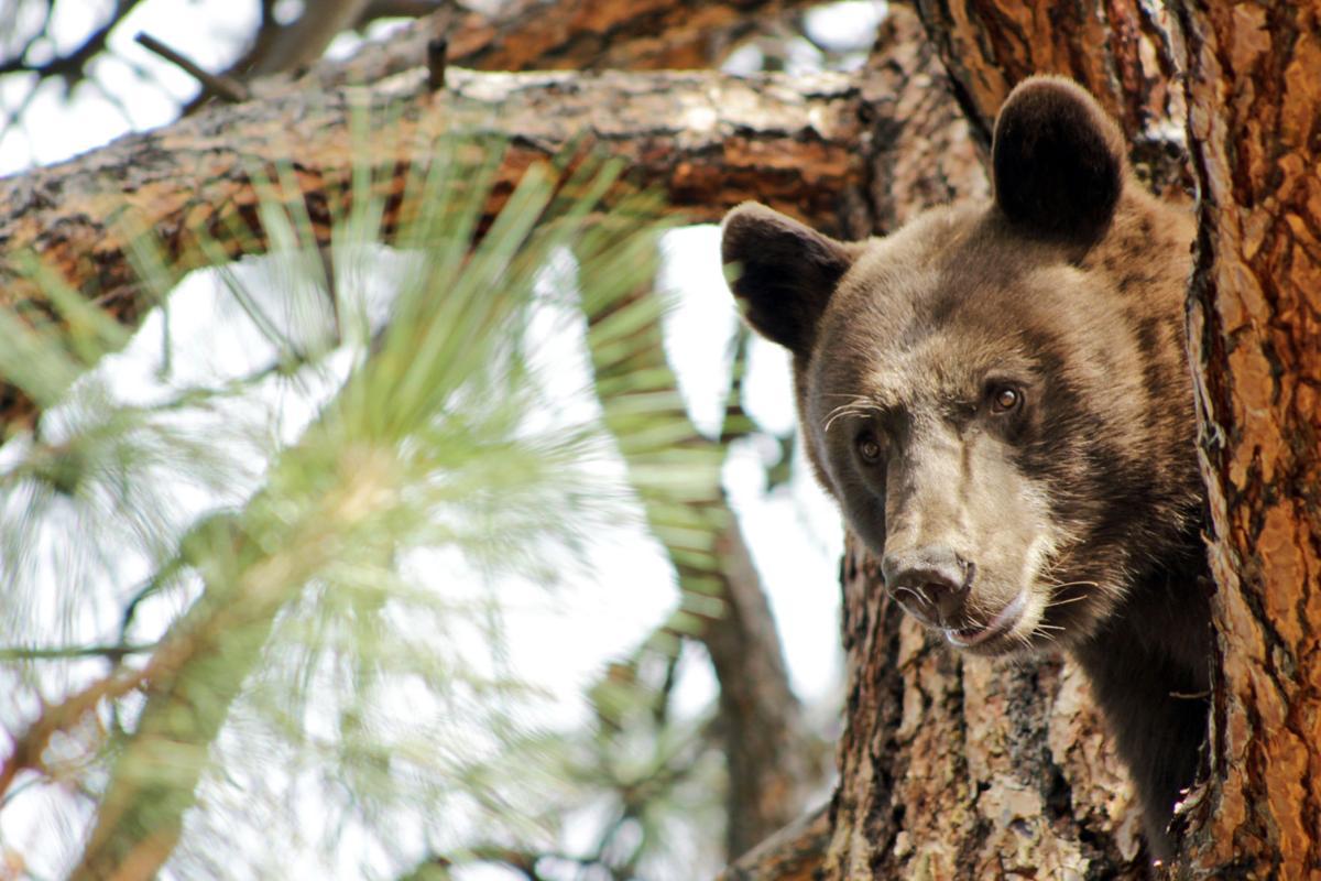 091515_bear1_bw.jpg