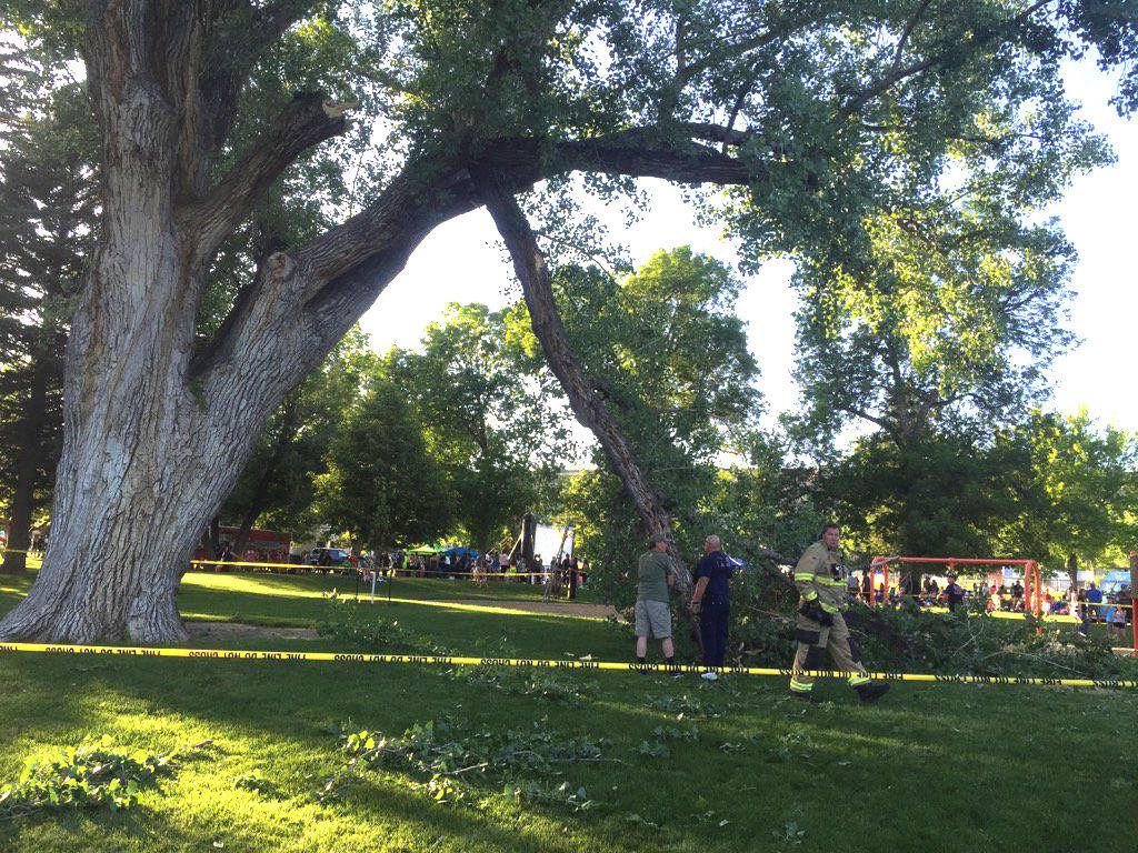 Veteran's Park tree branch falls on, injures man