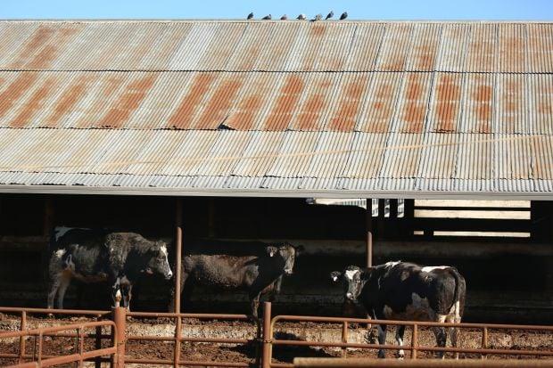 Beef recall from Petaluma slaughterhouse