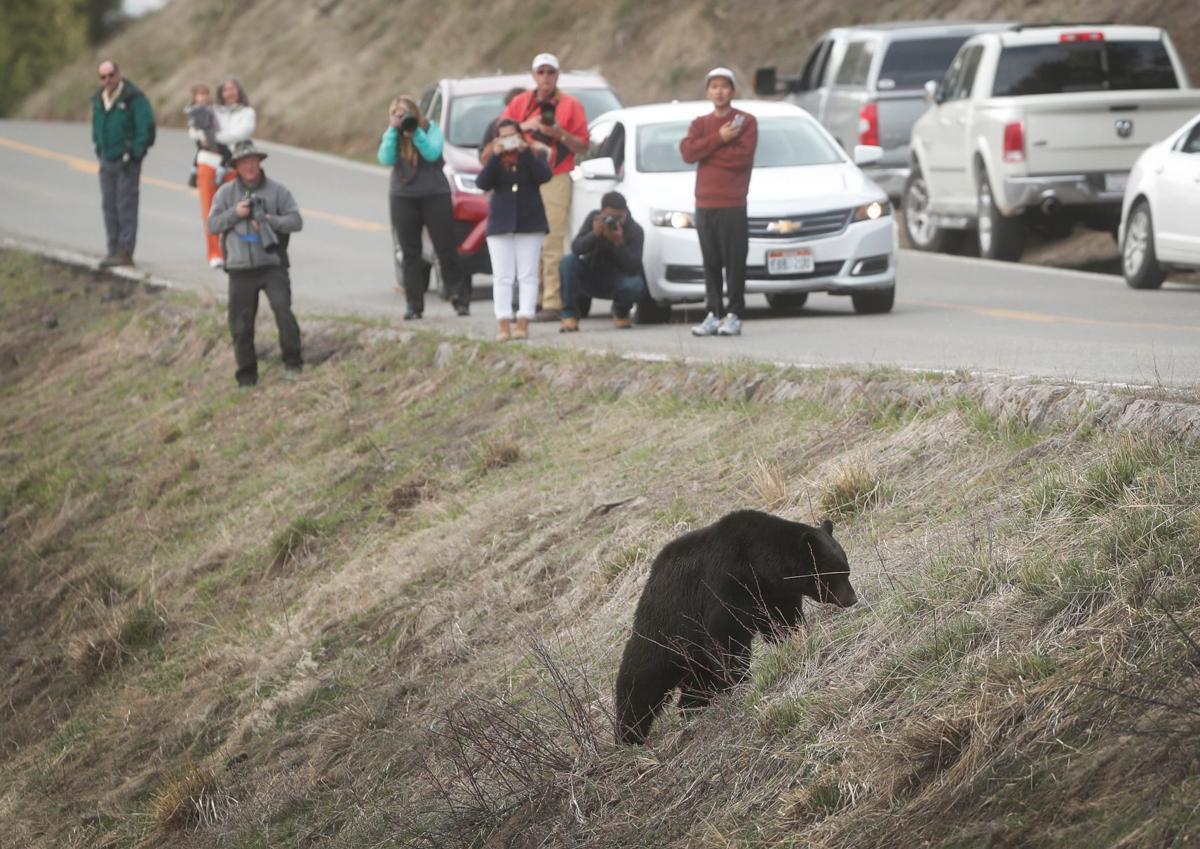 Yellowstone visitors