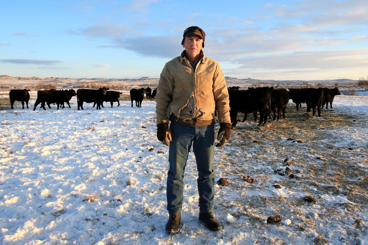 Scot Robinson and his herd