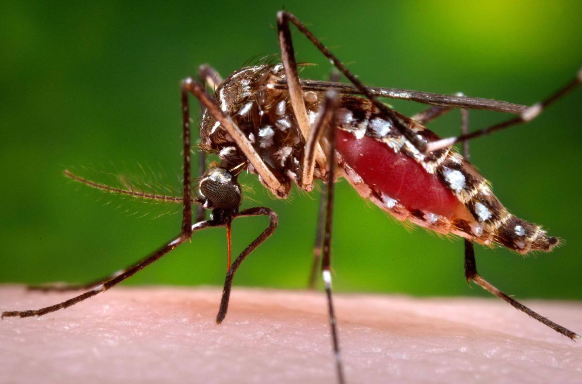 Montana mccone county circle - Montana S 1st 2016 West Nile Death Reported In Mccone County